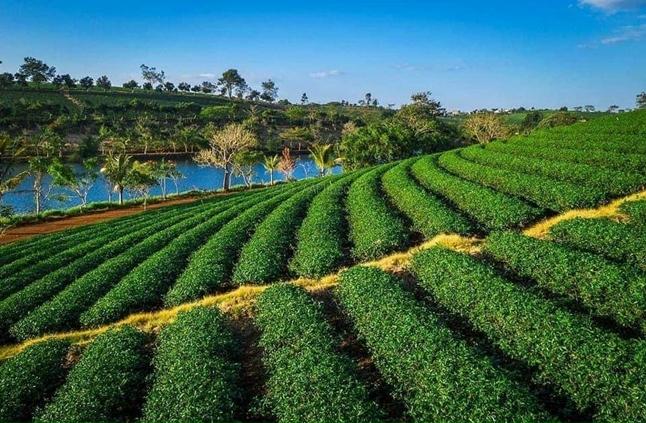 Đất nền sổ riêng Lộc Tân Bảo Lộc – Đối diện đồi chè Tâm Châu