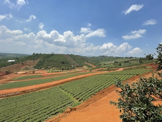 Bán Đất Nền Đồi Chè Tâm Châu – Sổ Hồng Riêng Đợt 1 Lợi Nhuận 10%