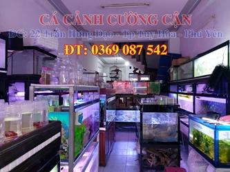 cửa hàng cá cảnh phú yên - cửa hàng cá cảnh CƯỜNG CẬN phú yên - cá cảnh phú yên