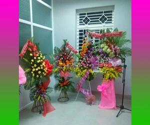 shop hoa sông hinh phú yên - (nhận kết hoa tươi, hoa khô, làm mâm quả cưới tại hai riêng sông hinh)