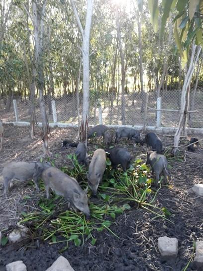 trại heo rừng 6 thượng phú yên